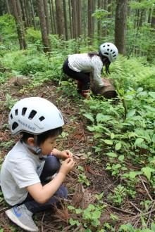山で木の実を探しています