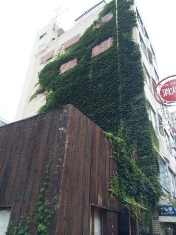蔦で覆われた外壁