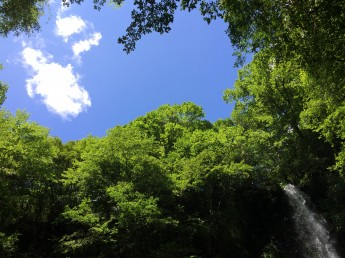 木々の中に見える空