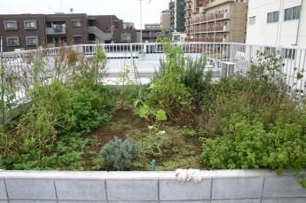 オーナー宅用屋上菜園