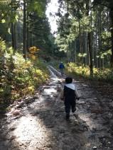 伐採場所までの移動