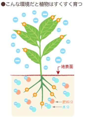 こんな環境だと植物はすくすく育つ
