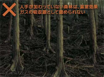 日本の森林の危機的な実情
